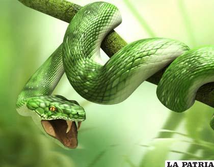 Las serpientes se mueven acorde con el terreno en el que se encuentran