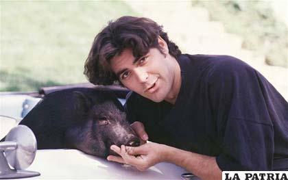 George Clooney tuvo un cerdo que era su mejor amigo