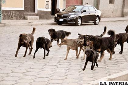 Casos de rabia en animales continúa en incremento