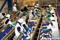 Fábrica de procesamiento de pescado /bagginis.blogspot.com
