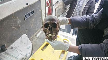 El cráneo que se encontró la mañana del viernes en Moxuma