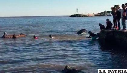 La ballena podría morir en unos días