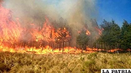 Imágenes que muestran la voracidad del incendio que afecta a poblaciones cercanas a la ciudad de Tarija