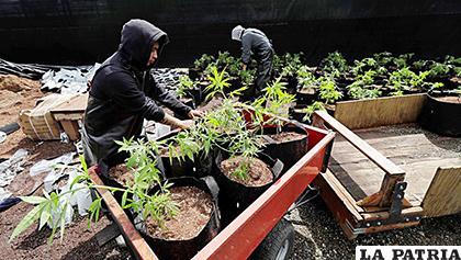 México supera récords en homicidios ligados al narcotráfico /CLARÍN