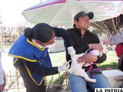 La aplicación de la dosis a la mascota no tardó ni un minuto con los animales dóciles.