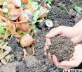 Planta de reciclaje permitirá reforzar debilidades de EMAO