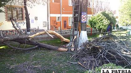 Se procedió con los trabajos de tala del árbol muerto ubicado en la plaza