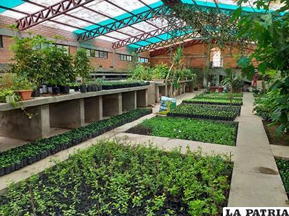 Más de 250 mil plantas al año se producen en el vivero de Socamani /GAMO