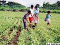 Productores de alimentos preservan y recuperan parte de la vegetación nativa