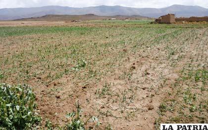 Sequías afectan a municipios de Oruro