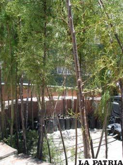 Inician obras de construcci n de vivero forestal municipal for Construccion de viveros forestales