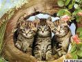 El gato es el único  animal que se domesticó a sí mismo