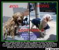 Voluntarios de GUAO recogen a los animalitos para darlos en adopción