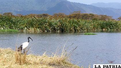 El lago está ubicado entre Kenia, Uganda y Tanzania
