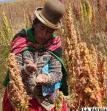 Una universidad muestra estudios reveladores sobre quinua boliviana