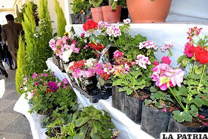 Viveristas explican la importancia de cultivar plantas en for Importancia de las plantas ornamentales
