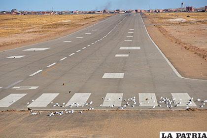 La reunión determinó realizar acciones inmediatas para que las aves no invadan el aeropuerto /Archivo