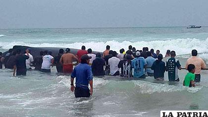 Se trata de la mayor cantidad de ballenas que ha encallado en las orillas de las playas brasileñas desde 2002