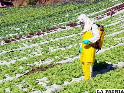 Los gobiernos deben revisar el uso de plaguicidas en la agricultura para evitar negativos efectos contaminantes