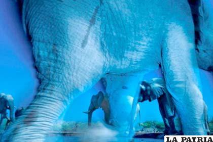 """La instantánea """"Esencia de elefantes"""""""