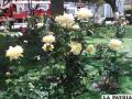 Luis de Fuentes, la  plaza de las flores