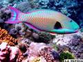 Animales con deslumbrantes colores