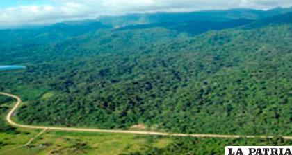 Vegetación en el  territorio de los indígenas tacanas en el norte de La Paz /BLOGSPOT.COM