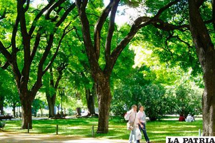 Las ciudades, con todo su cemento y desarrollo tecnológico dependen de los árboles