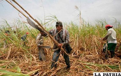 El sector azucarero preveía producir este año 8,5 millones de quintales