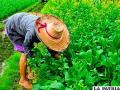 La agricultura busca respeto ambiental y social