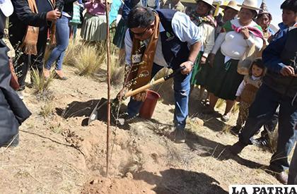 El ministro de Medio Ambiente, Ortuño, contribuye con la siembra del bosquecillo en Poopó /LA PATRIA