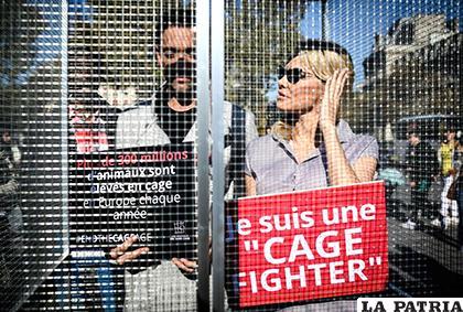 Anderson asumió una medida poco usual para evitar la cría de animales en jaulas / AFP