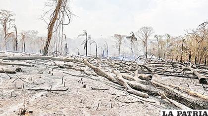Incendios devastaron la vegetación en la Chiquitanía /Pablo Rivera