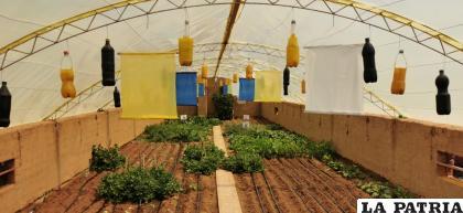 Las carpas solares, un gran beneficio para la producción / LA PATRIA