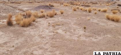 23 municipios se declararon en desastre debido a la sequía /LA PATRIA