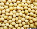 FAO evaluará seguridad alimentaria en  el país y sus necesidades inmediatas