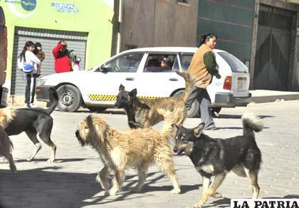 Zoonosis capturará perros callejeros para que sean vacunados