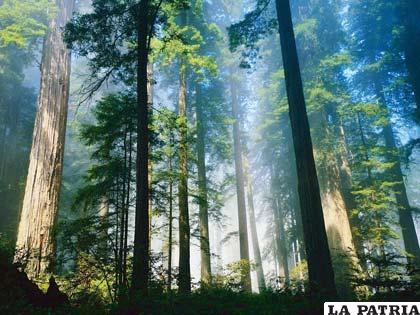 Uno de los bosques en Santa Cruz