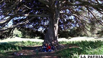 El video destaca las cualidades y la importancia de los árboles