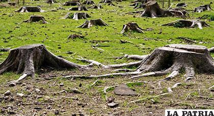 En 25 años se han destruido centenares de miles de hectáreas donde había árboles en Albania