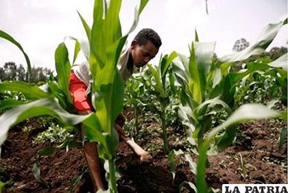 Es fundamental diseñar acciones orientadas a reducir los niveles de vulnerabilidad al cambio climático /ccaocr.org