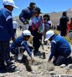 Llica y Tahua plantan 4.800  arbolitos en 4 hectáreas