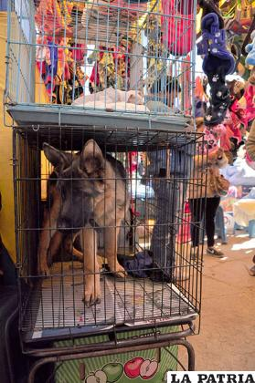 La venta de perros en los mercados está prohibida /Archivo