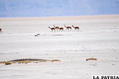 Se deben adoptar medidas contra una posible sequía /LA PATRIA ARCHIVO