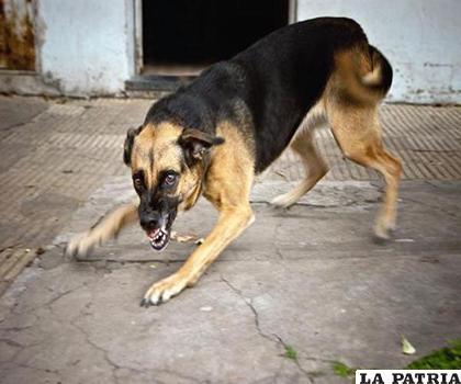 Se debe implementar en plenitud la tenencia responsable de mascotas /LA PATRIA