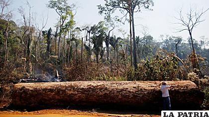 Algunos científicos sostienen que la Amazonía ha sufrido pérdidas aceleradas desde que Jair Bolsonaro asumió la presidencia /Reuters