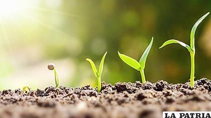 Las plantas tienen memoria de períodos de sequías, y aprenden a adaptarse en caso de que el estrés se repita /Econoticias