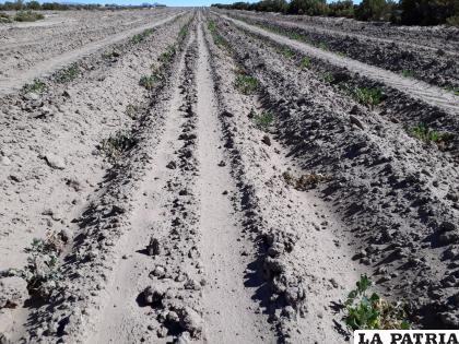 Soracachi no sólo produce hortalizas sino también quinua /laquinua.blogspot.com (imagen referencial)