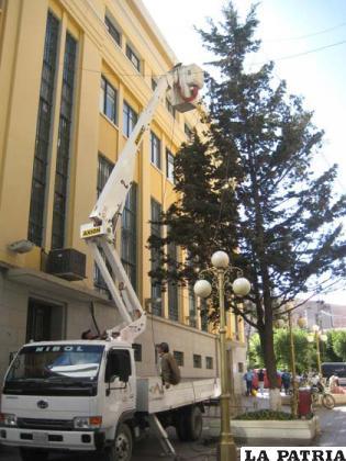 Personal del Municipio arma el árbol de Navidad