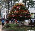 Árbol de la plaza 10 de Febrero que fue iluminado con focos de colores, creación que debe estimular a vecinos para replicar la iniciativa en sus barrios